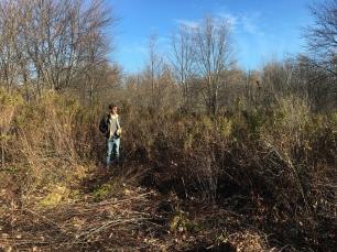 Marsh Clearing