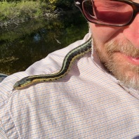 Garter Snakes drowsy in the Sun