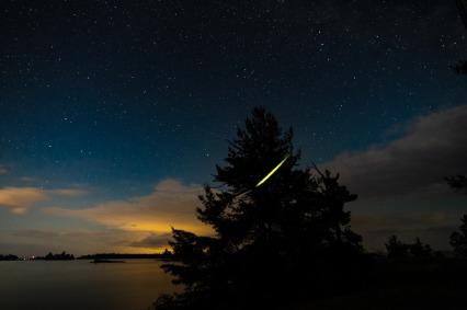 Fireflies - magical.